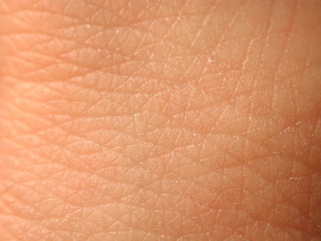 Image result for skin picture